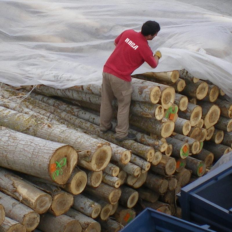 Tratamiento de la madera - Fumigación y control de plagas Valencia