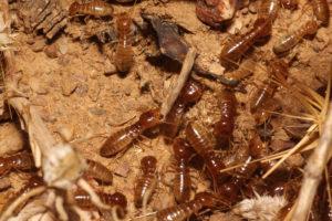 Plagas de la madera - Control plagas Valencia