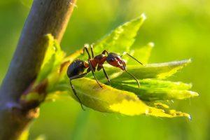 Control de hormigas - Empresa de fumigación de plagas