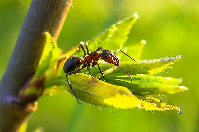 Exterminar hormigas