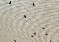 Control de insectos de los productos almacenados