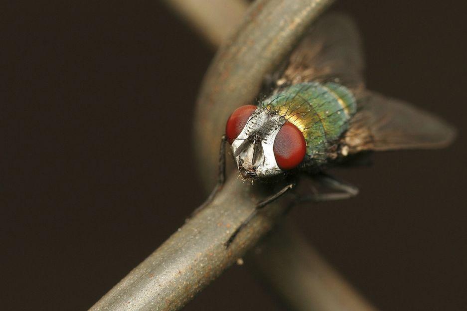 Eliminar plaga de moscas - Control plagas Valencia