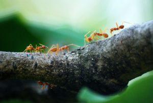 evitar-plagas-insectos